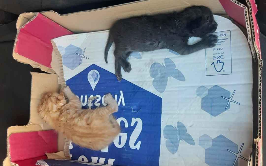 Gatitos que echaron a un contenedor el pasado viernes en Caspe.