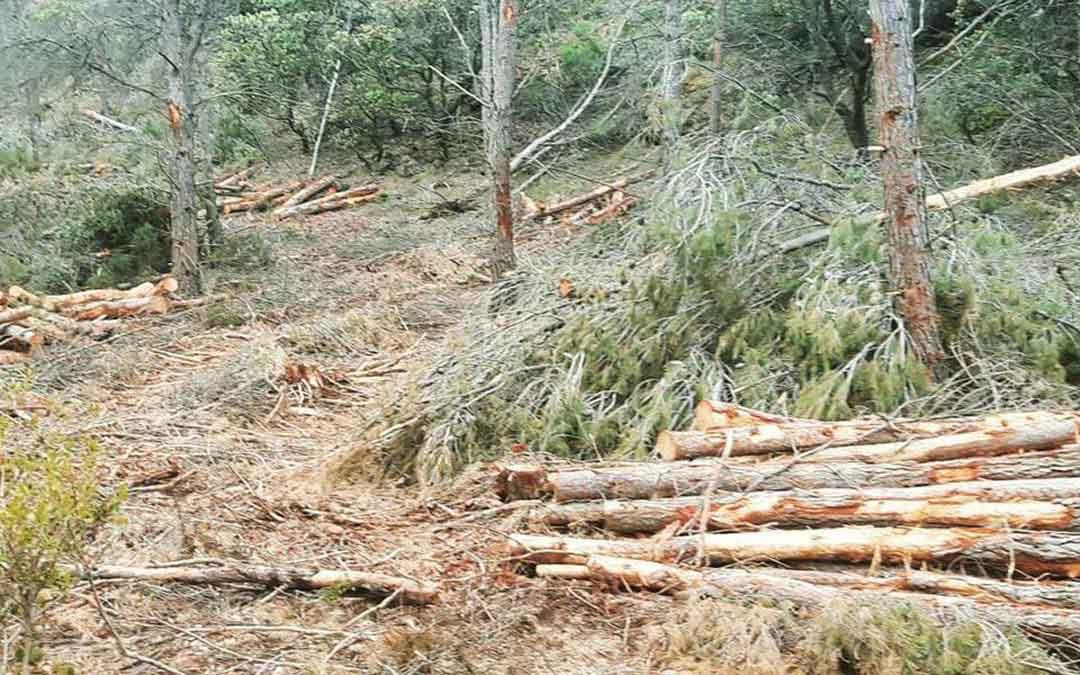 Imagen de archivo de la masa forestal dañada por la borrasca Gloria./ Servicio Provincial-M. Flecha