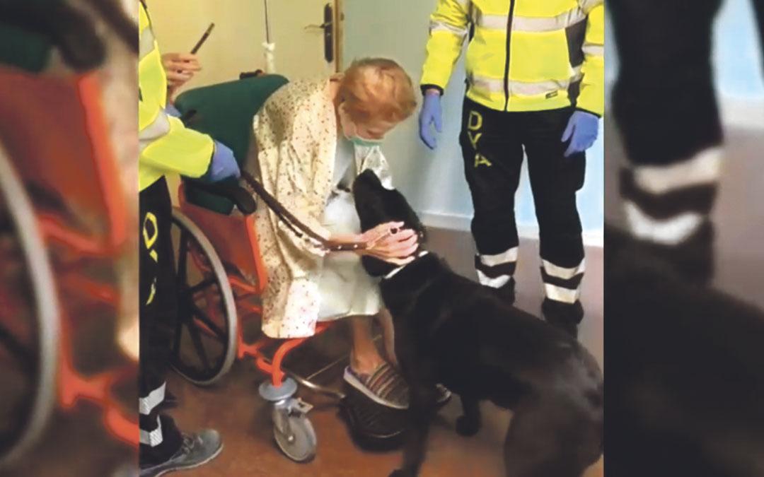 La alcañizana Soledad Arcusa Martínez se reúne con su perro guía Evy en el Hospital Miguel Servet de Zaragoza./ L.C.