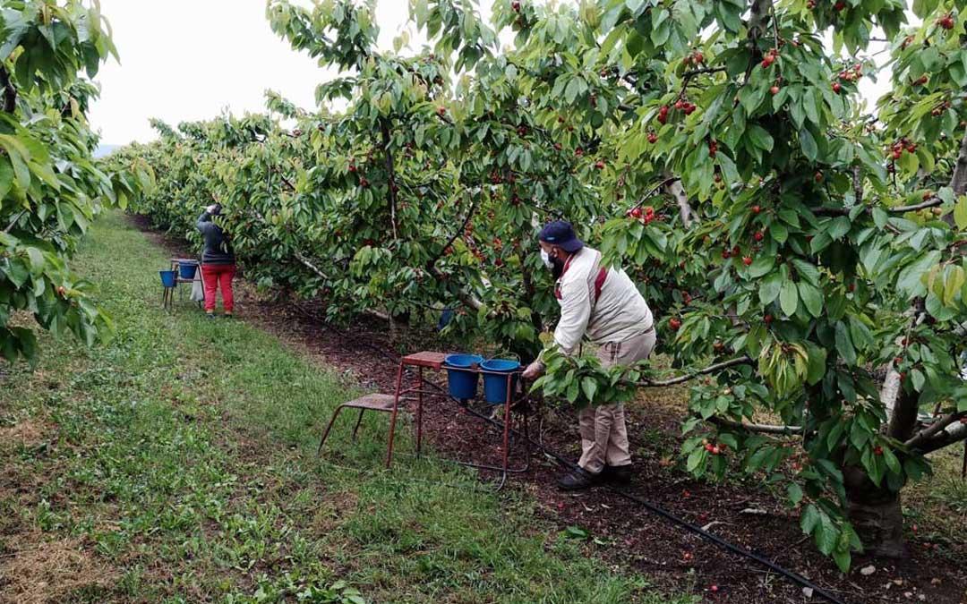 UAGA critica la «arbitrariedad y la presión» de las inspecciones a los fruticultores