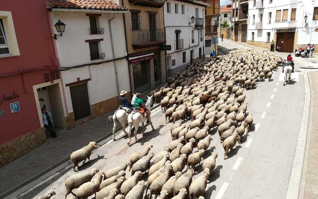 El ganado trashumante pasea por La Iglesuela guiado por los pastores./ Ayto. La Iglesuela del Cid
