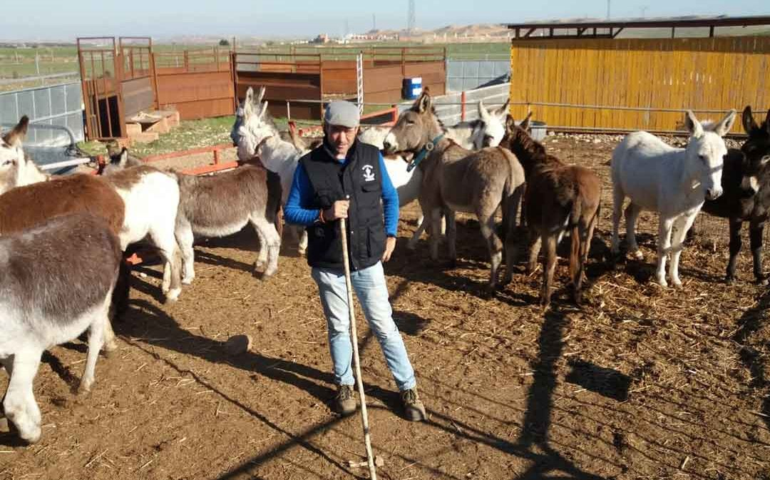 La suspensión de las fiestas condenaría a los ganaderos