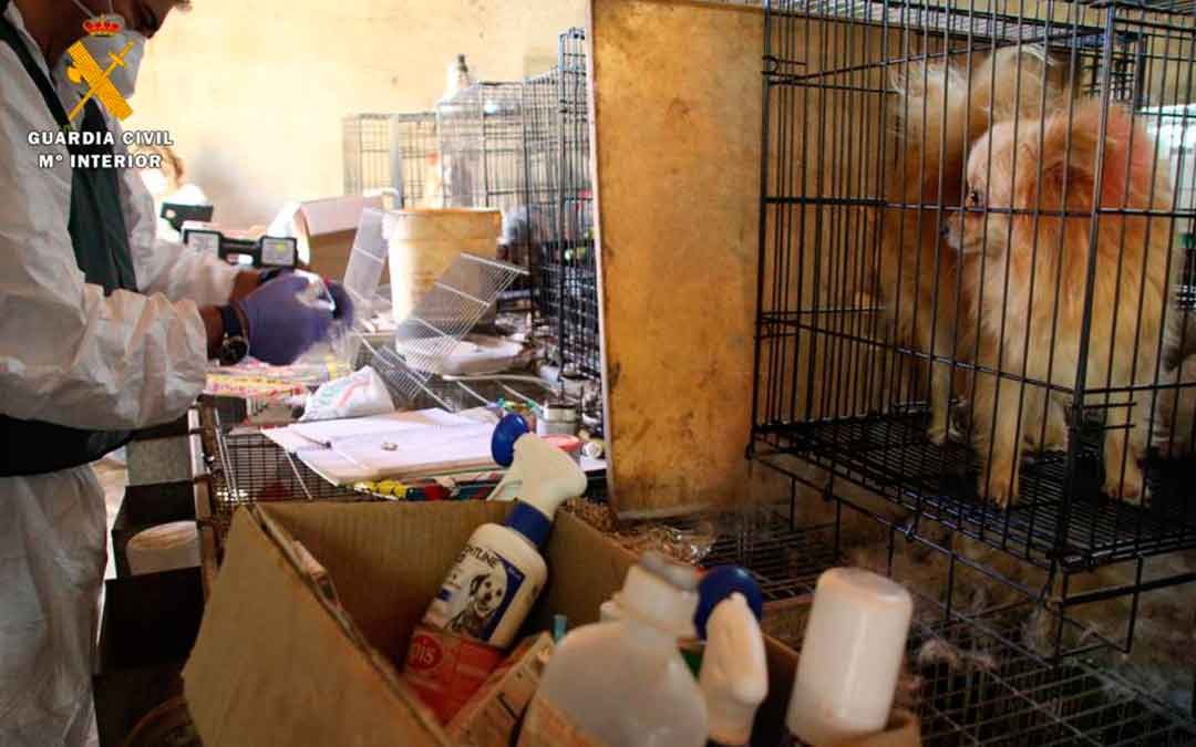 Imagen del criadero ilegal de perros en Caspe. Fuente: Seprona de Guardia Civil