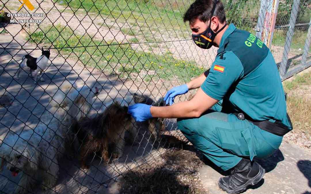Imagen del criadero ilegal de perros hallado en Maella./ Seprona de Guardia Civil