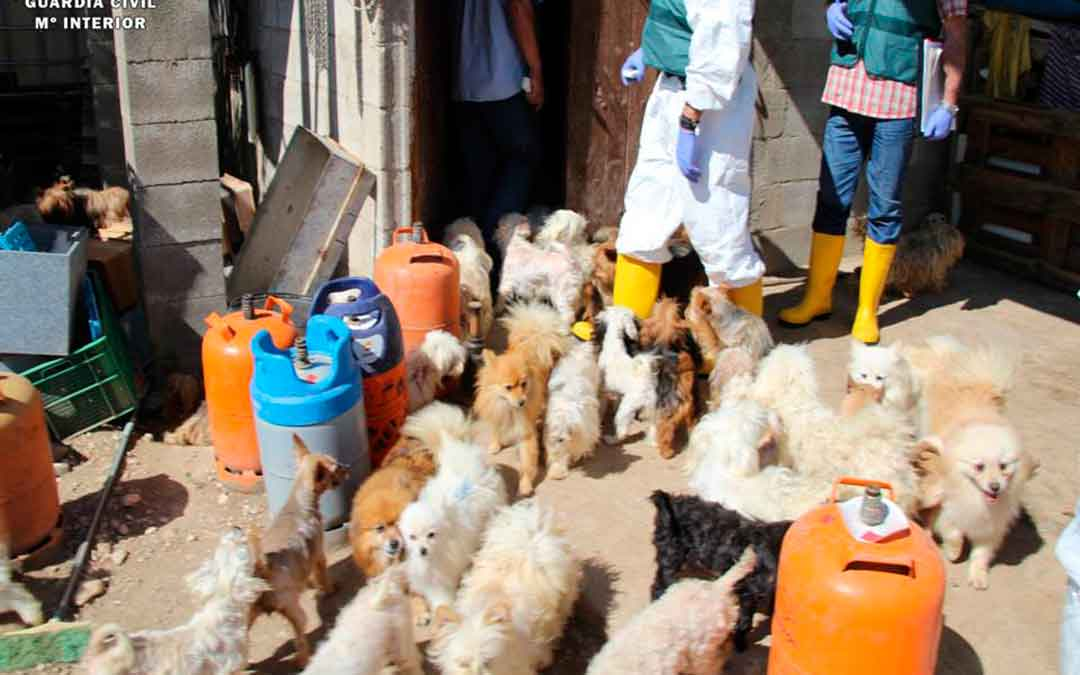 El investigado por maltratar a más de 540 perros en Maella instala su criadero en Foz Calanda