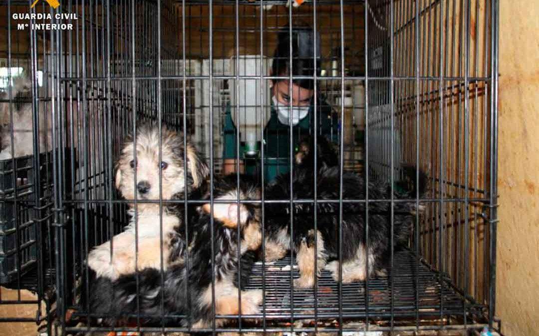 En adopción los perros rescatados en un criadero ilegal de Maella