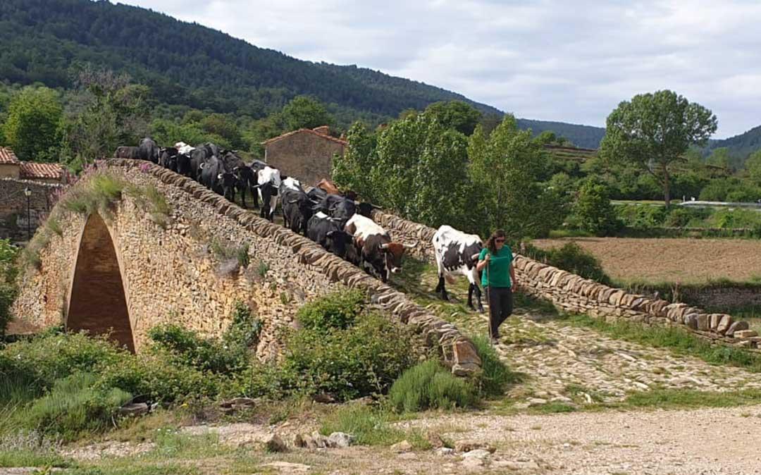 El rebaño de la familia Martorell en el puente de la Pobla de Bellestar, entre Villafranca del Cid y La Iglesuela. /Ayto. La Iglesuela