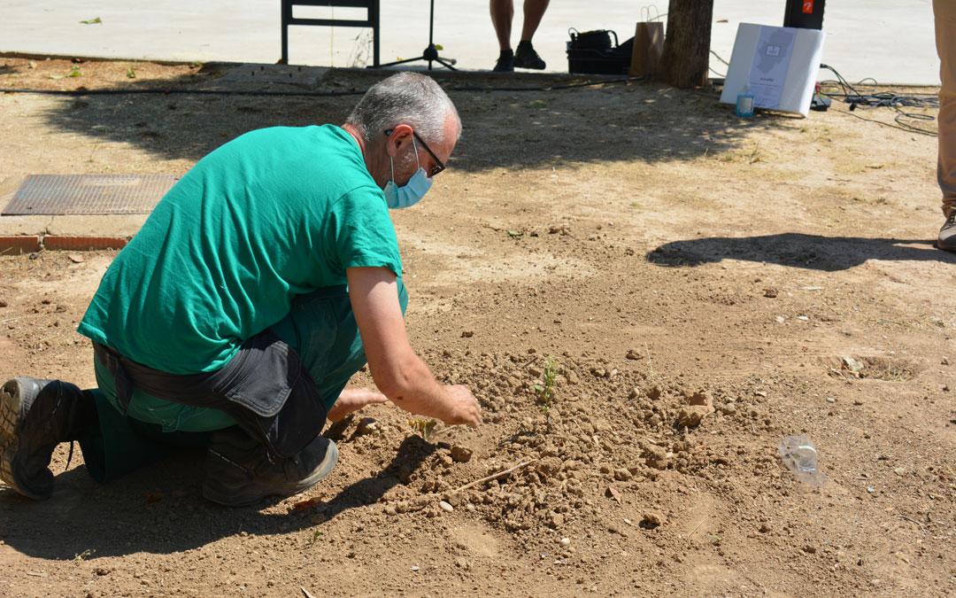 Momento de la plantación de la carrasca en Alcañiz./I.M.