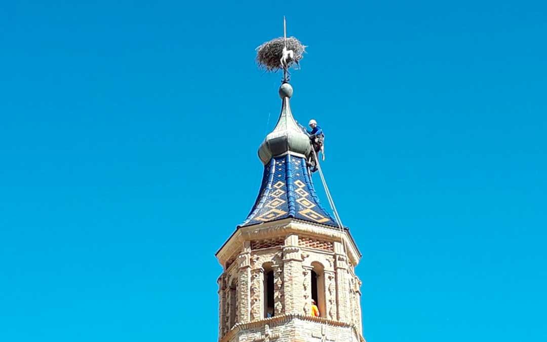 Retiran una cigüeña muerta en Albalate tras quedar atrapada en el nido de la gran torre parroquial