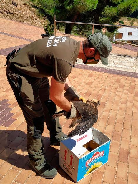 La caja donde refugiaron al animal./ Fernando Ruiz
