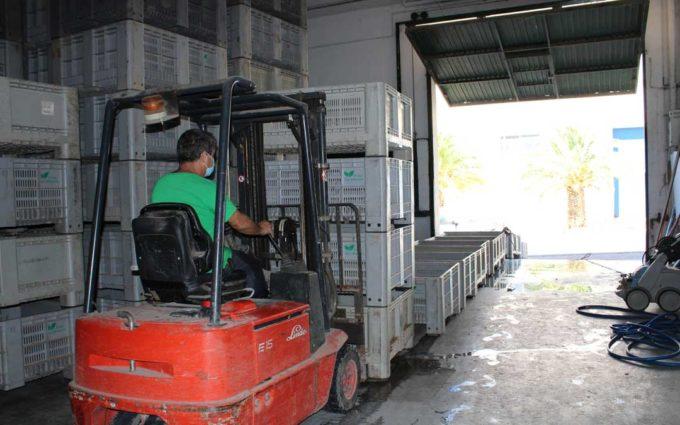 El sector frutícola considera «extrema» la orden para comunicar las previsiones de contratación de temporeros