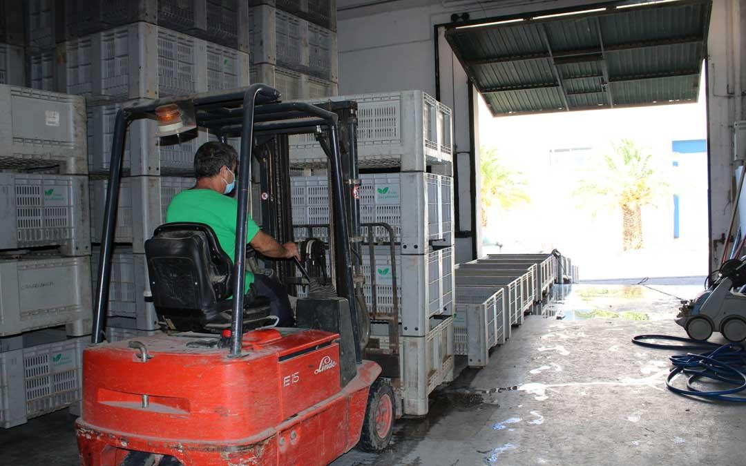 Un trabajador de Frutas Casablanca, en Chiprana, este jueves en el almacén / Pilar Sariñena