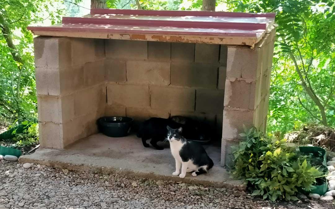 Los felinos tienen comederos con agua y pienso en las casetas.