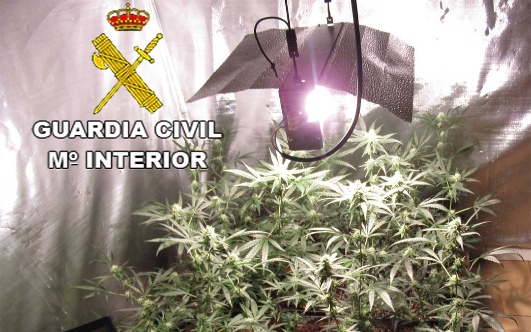 Plantación de marihuana intervenida por la Guardia Civil./ Guardia Civil de Teruel