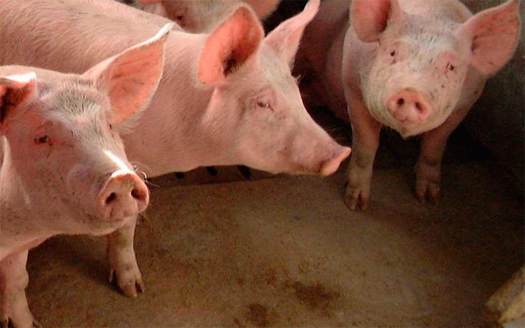 La zona geográfica de producción de la IGP Cerdo de Teruel está constituida por la provincia de Teruel./ DGA