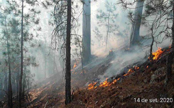Un amplio dispositivo logra sofocar a tiempo el incendio de Beceite que calcina 1,1 hectáreas de pinar