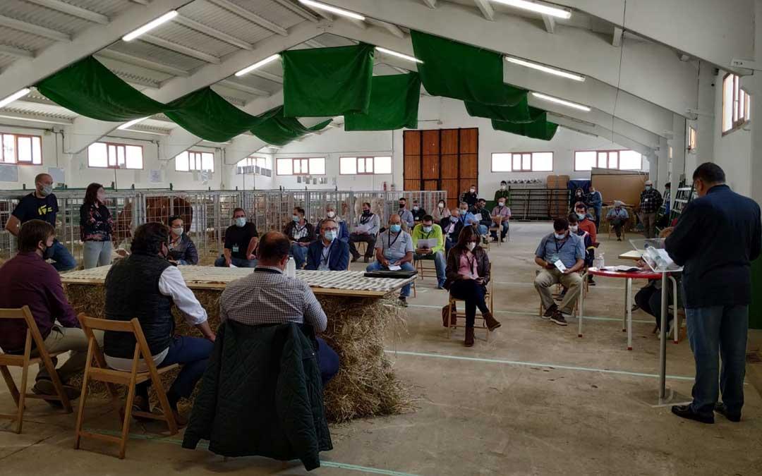 Participantes en la subasta de ganado vacuno celebrada en Cantavieja