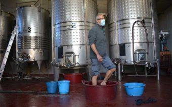 Pies descalzos para elaborar vino en el taller de empleo 'Agroalcañiz'