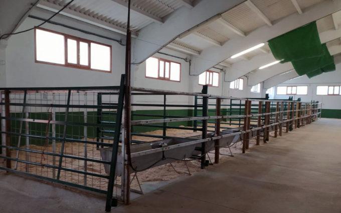 Cantavieja celebra la subasta nacional de ganado sin su feria