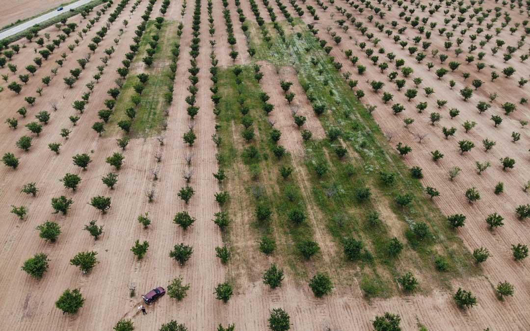Una de las imágenes de las pruebas del ensayo con la cubierta vegetal en uno de los campos de cultivo. / La Comarca