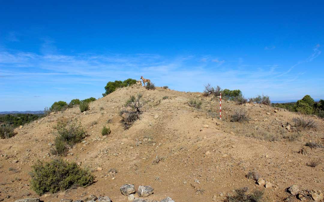 Zona en la que se excavará la fosa común de la 1ª Brigada Mixta de la 11º División del Ejército Popular de la República / CHAMA