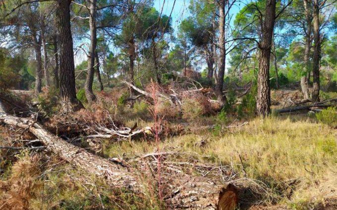 Los APN restauran daños de la borrasca Gloria en Alcañiz