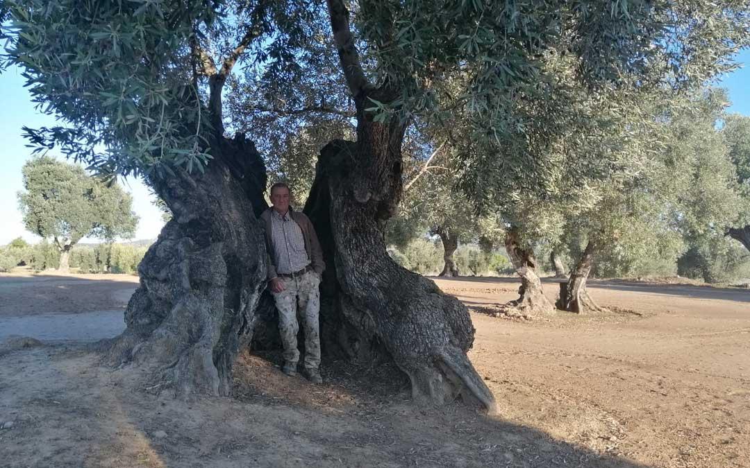 Eduardo Cuella es el propietario de la Olivera Femada en La Fresneda, uno de los árboles catalogados.