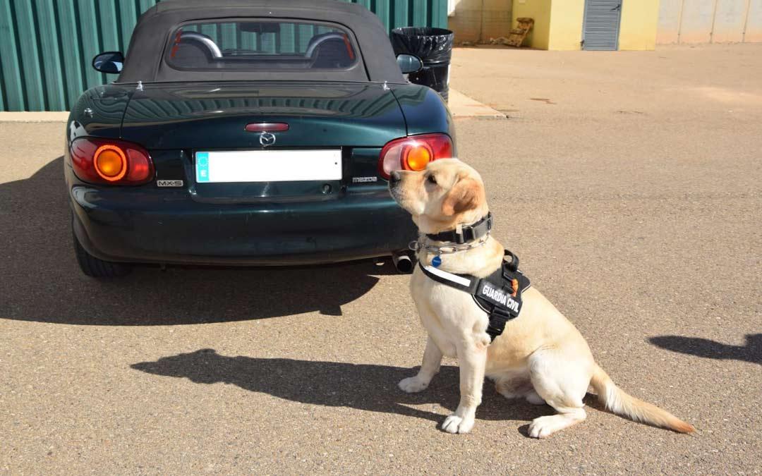 Perro de la Guardia Civil en el dispositivo de seguridad./G.C. Teruel