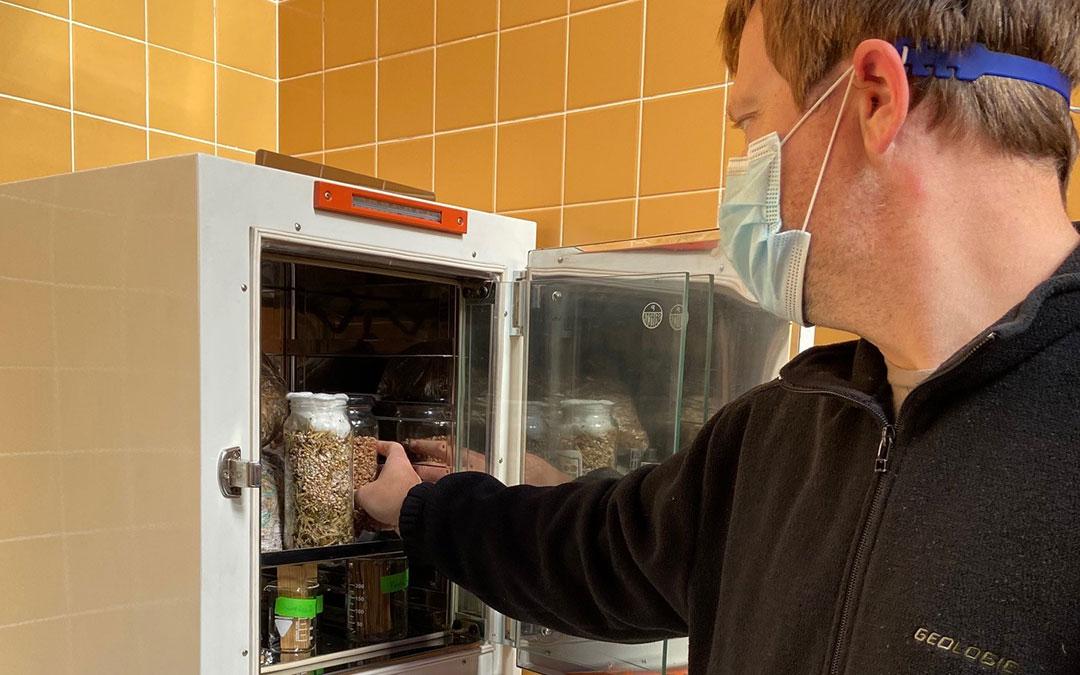 Las primeras puebas con micelio ya han comenzado. En la imagen, algunas muestras dentro de la incubadora./ Alicia Martín