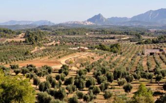 Aceite de oliva gourmet recogido a mano en Cretas