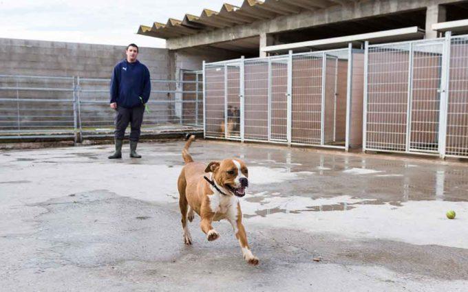 La DPZ busca un hogar para 20 perros que llevan hasta 5 años en su centro de protección animal