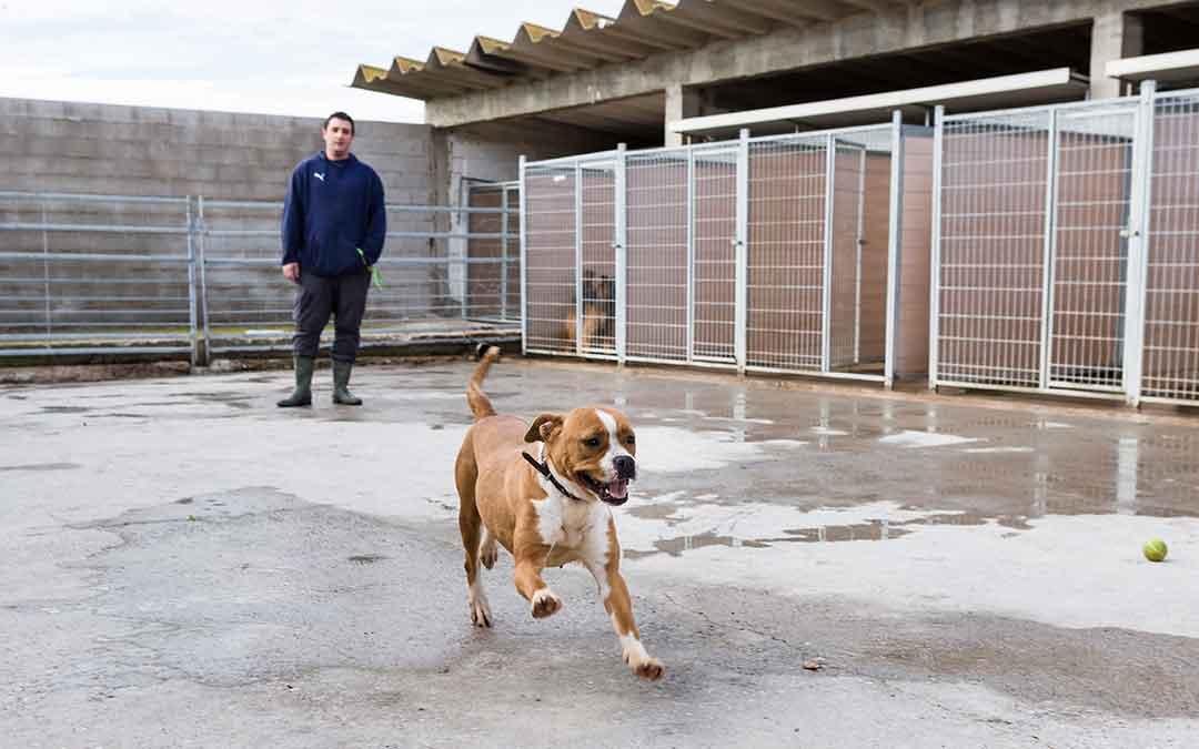 Uno de los perros que buscan adopción, en la protectora de Zaragoza.