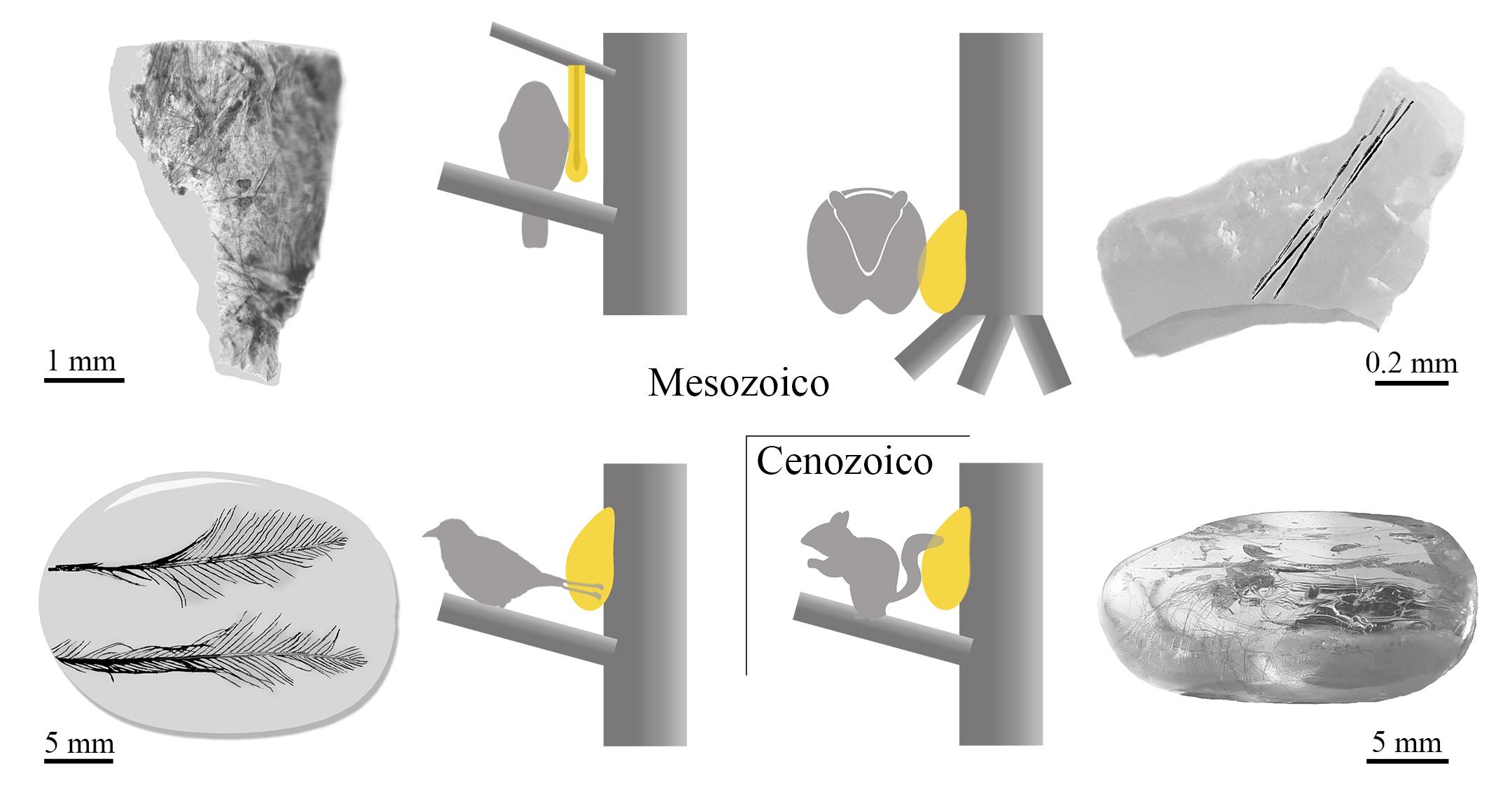 Esquema de cuatro ejemplos del proceso 'pull off vestiture' en piezas de ámbar de San Just, Ariño, Myanmar y Báltico, de izquierda a derecha y de arriba a abajo / scientific reports