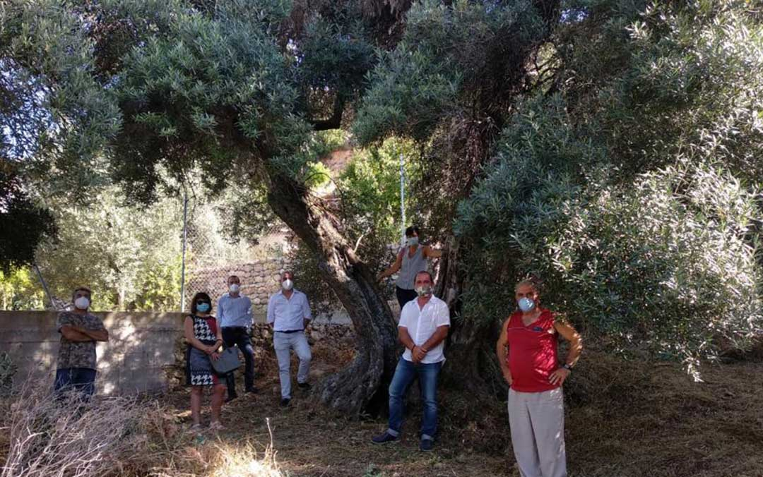 Representantes del Ayuntamiento de Peñarroya de Tastavins y de la Taula del Sénia, junto a un olivo milenario catalogado./ Taula del Sénia