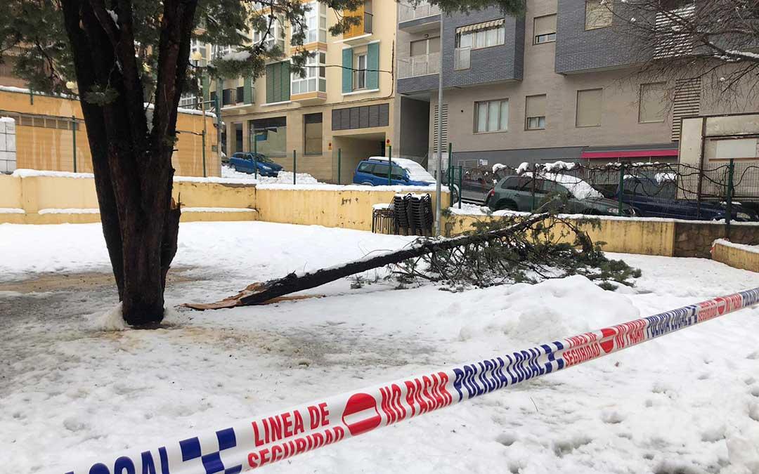 Una rama caída en el Solar de Sindicatos, en la Avenida Aragón de Alcañiz./ Laura Castel