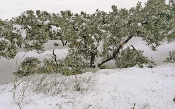 UAGA pide zona catastrófica para el olivar del Bajo Aragón, Matarraña y Belchite