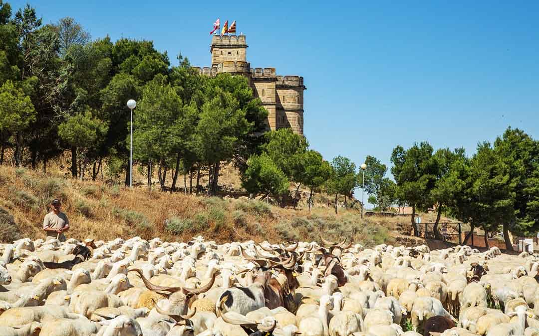 Un ganadero con sus ovejas junto a la Torre Salamanca de Caspe. Imagen: Junta Local de Ganaderos de Caspe.