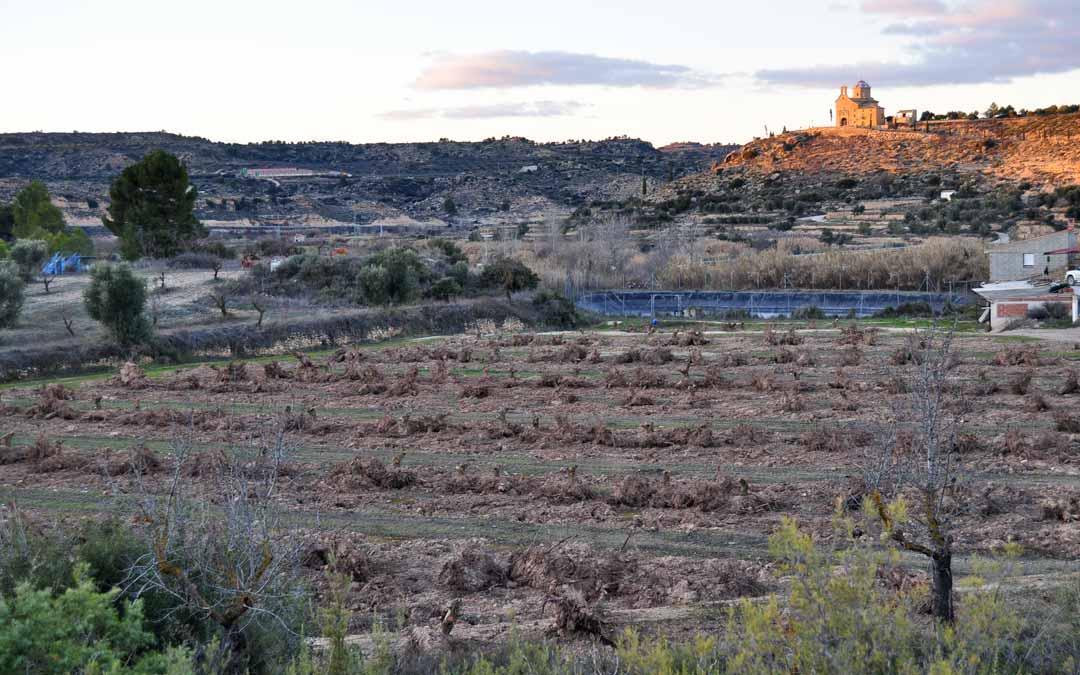 El panorama es dantesco en muchas de las fincas que rodean a la localidad, con centenares de árboles arrancados.