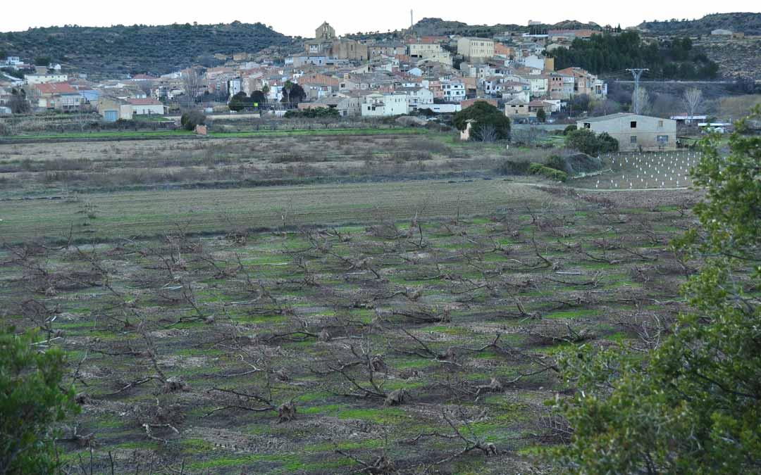 La localidad ha perdido el 80% de los melocotoneros./ Javier de Luna