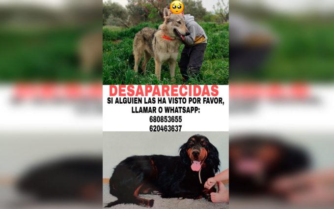 La Guardia Civil investiga la desaparición de dos perros de una vivienda a las afueras de Caspe