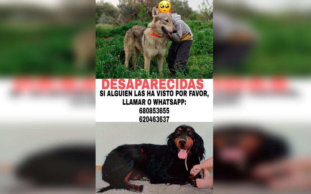 Cartel con la imagen de las dos perras desaparecidas, que está siendo compartido por la ciudadanía, con los teléfonos de contacto.