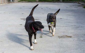 El centro de protección animal de la DPZ atendió en 2020 a 164 perros recogidos por toda la provincia