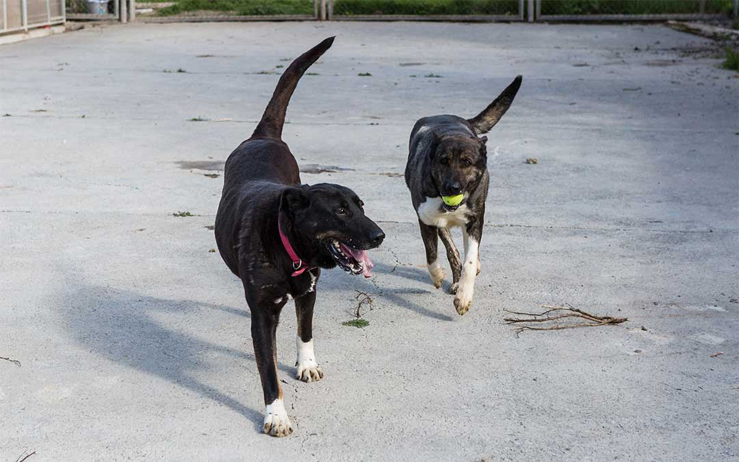 Perros en adopción del centro de protección animal de la Diputación de Zaragoza./ DPZ