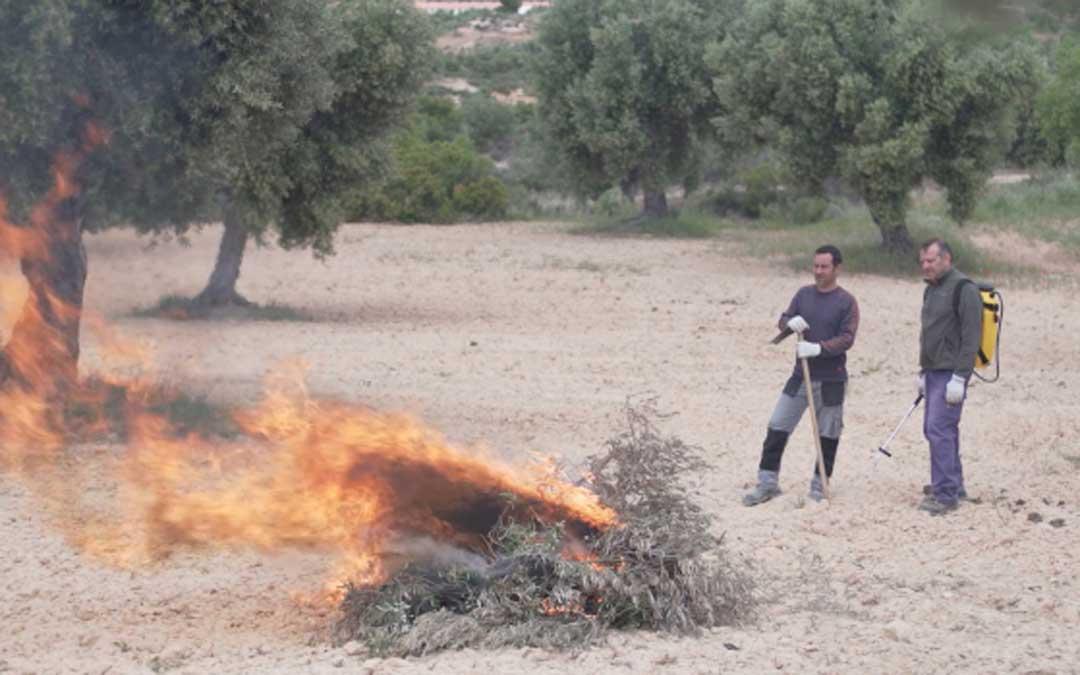 Una quema controlada en un campo de olivos. Foto: DGA