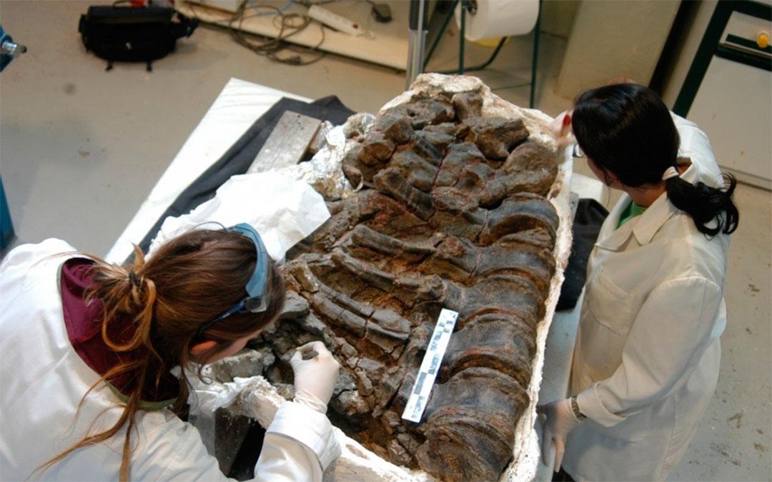 Preparación de los fósiles en el laboratorio de Dinópolis./ DGA