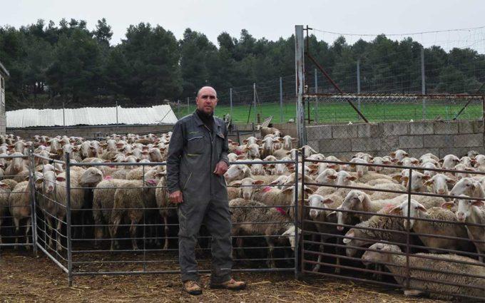 Alertan del riesgo de desaparición de la ganadería ovina del Matarraña
