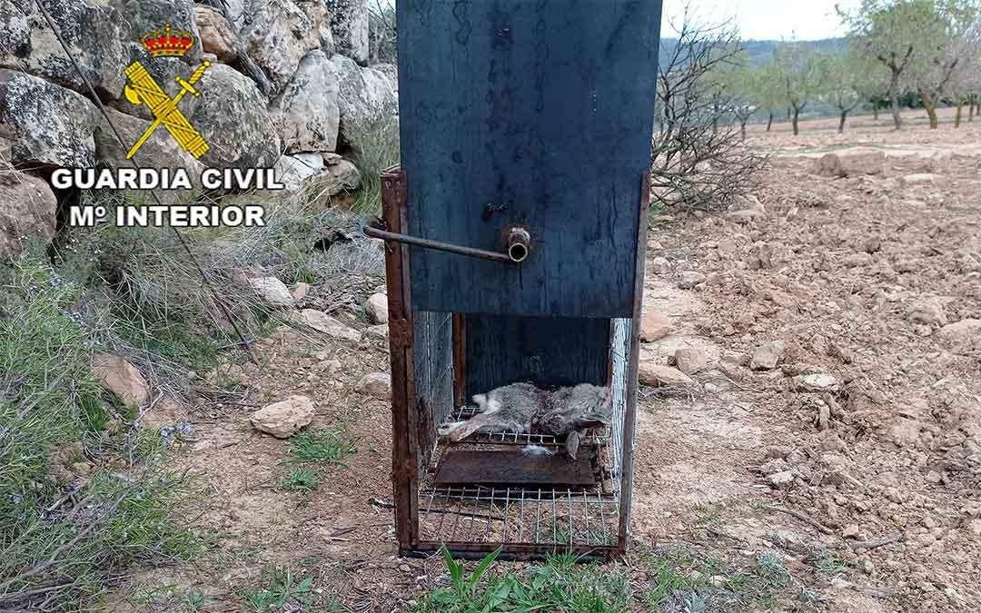 La colocación de jaulas trampas es un método prohibido por ser masivo y no selectivo, puesto que se pueden capturar especies silvestres protegidas./ Guardia Civil