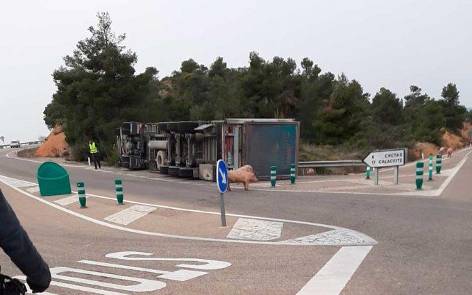 Vuelca un camión cargado de cerdos en la A-231 entre Valderrobres y Cretas