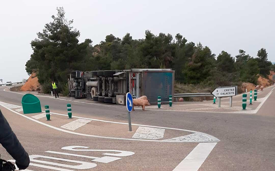 Varios cerdos escaparon del vehículo por lo que la operación se alargó durante varias horas./ L.C.