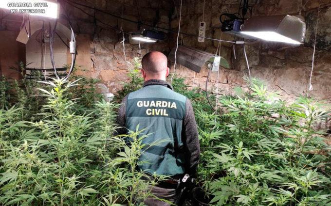 Dos detenidos por cultivar más de 200  plantas de marihuana en dos viviendas de Nonaspe